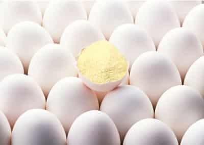 Albumina deriva da albume (uovo)