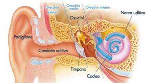 acufene-orecchio