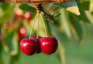 ciliegie zuccheri