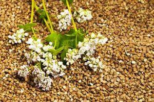 grano saraceno pianta
