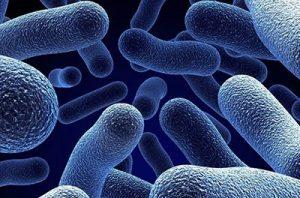 amoxicillina batteri