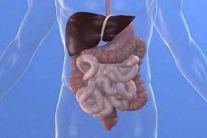 digestione organi