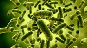 cefixoral flora batterica