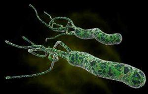 Ulcera gastrica helycobacter