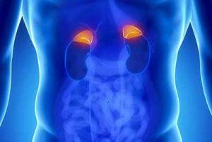 Prima di essere un medicinale da banco, il cortisone è una sostanza prodotta nel nostro organismo dalle ghiandole surrene