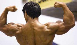 Somatotropina muscoli