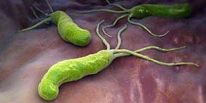 codex helicobacter