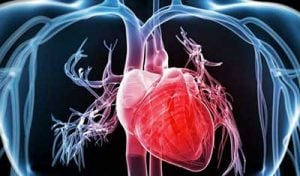 cardicor cuore