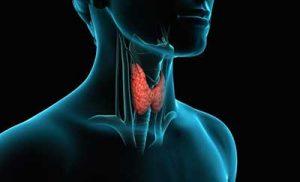 peridon tiroide